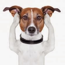 What are Signs that Your Dog Is Stressed?
