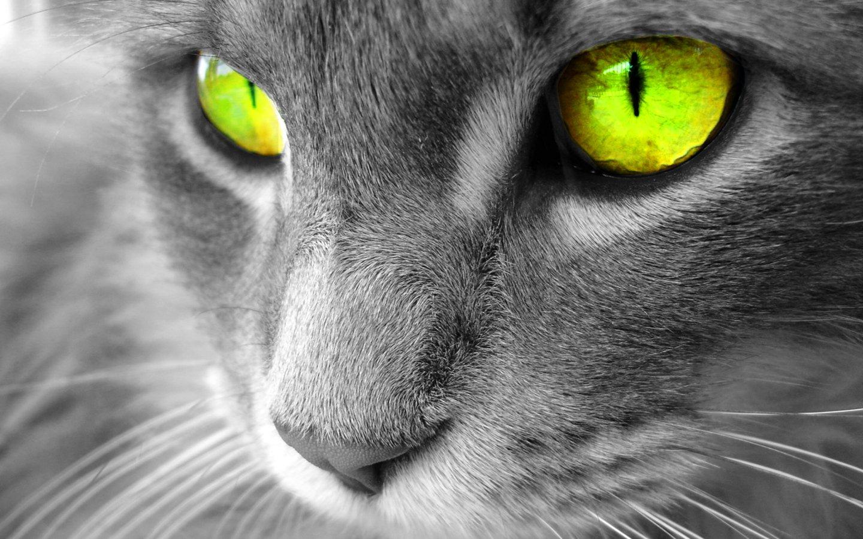 Best Desktop HD Wallpaper - Cat Desktop wallpapers