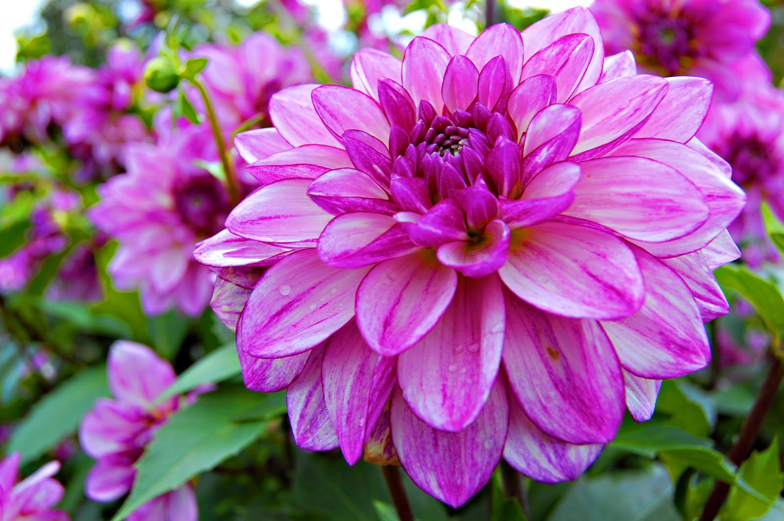 Fondos De Pantalla De Flores Hermosas Para Fondo Celular: Fondo De Pantalla Flores Fondos De Pantalla Flores Taringa