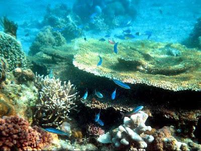 keindahan bawah laut pantai air manis