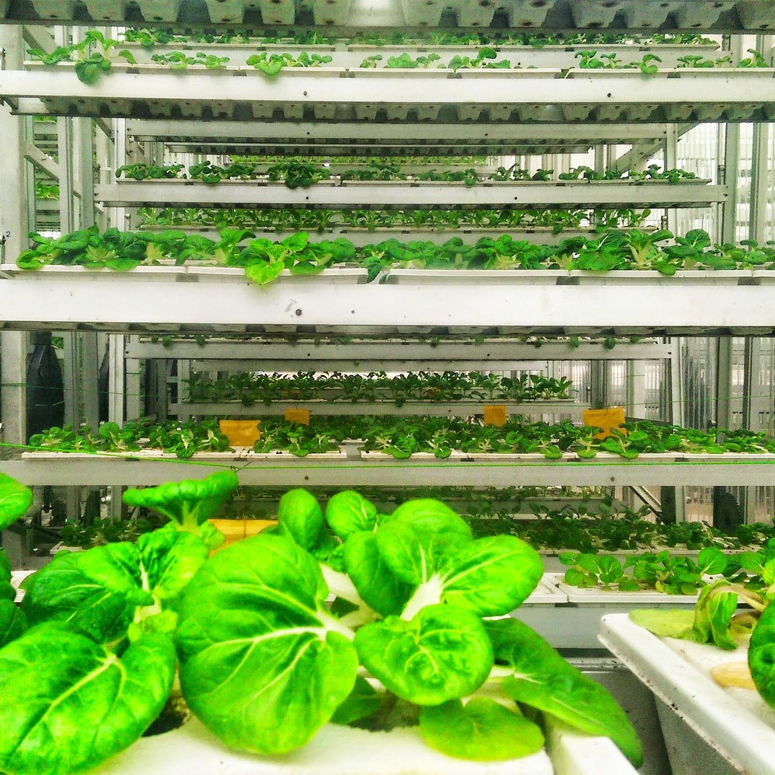 Urban Farming In Singapore