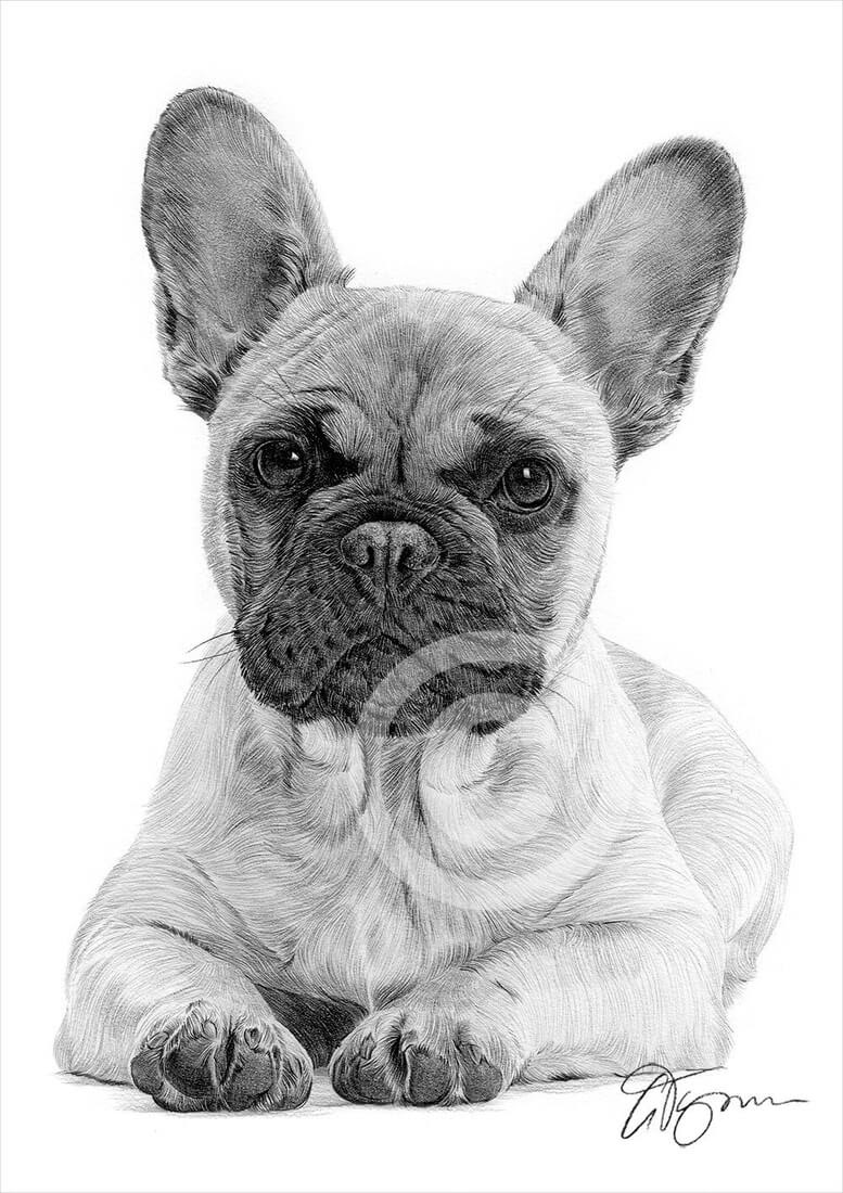 14-French-Bulldog-Gary-Tymon-Wildlife-and-Domestic-Animal-Pencil-Drawings-www-designstack-co