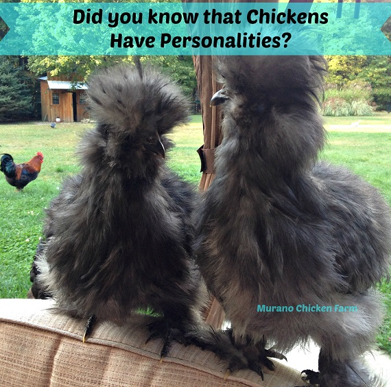 chickens have personalities!