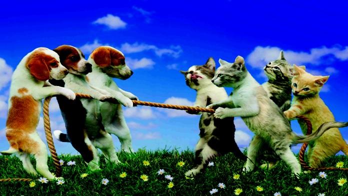 Perché cani e gatti vivono meno degli umani?