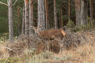 http://www.rtve.es/alacarta/videos/red-natura-2000/red-natura-2000-07-05-16/3600970/#aHR0cDovL3d3dy5ydHZlLmVzL2FsYWNhcnRhL2ludGVybm8vY29udGVudHRhYmxlLnNodG1sP3BicT0yJm9yZGVyQ3JpdGVyaWE9REVTQyZtb2RsPVRPQyZsb2NhbGU9ZXMmcGFnZVNpemU9MTUmY3R4PTk1NTUwJmFkdlNlYXJjaE9wZW49ZmFsc2U=