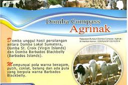 Sejarah Domba Compass Agrinak