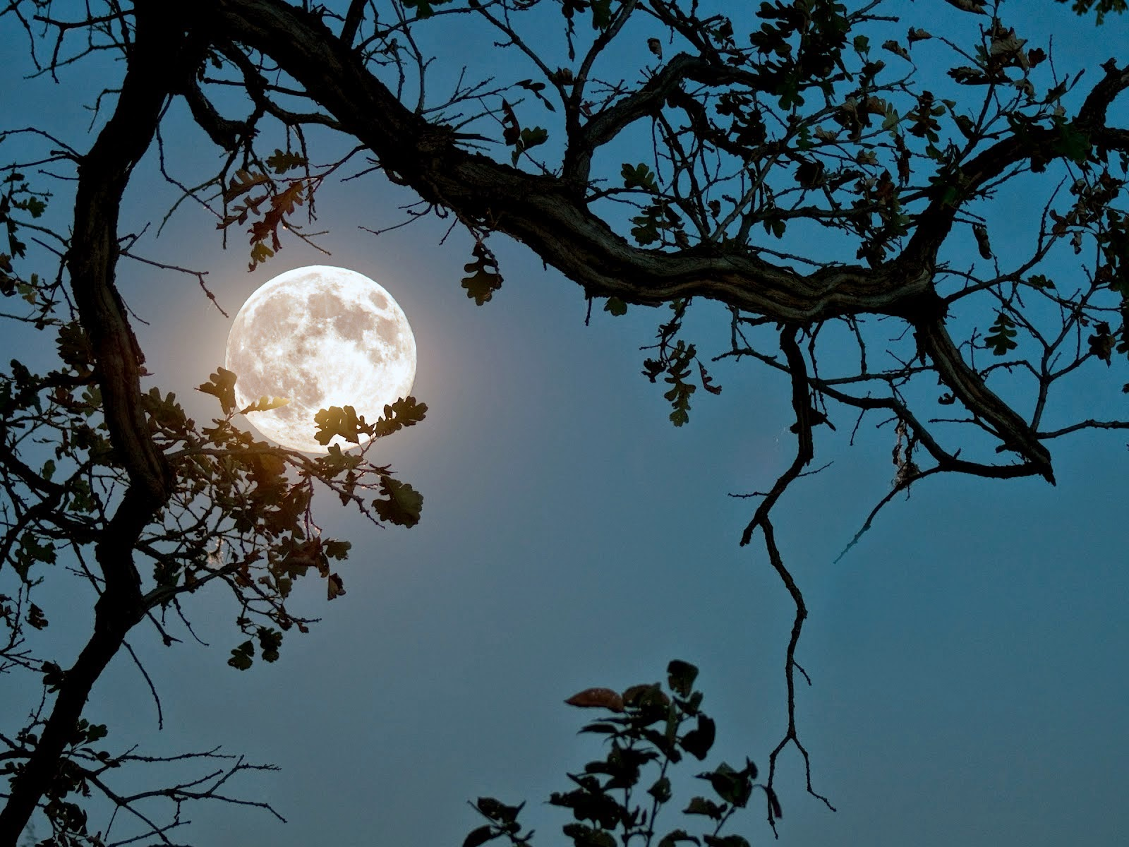 Moonlight-photography-view-of-moon-between-tree-leaves.jpg