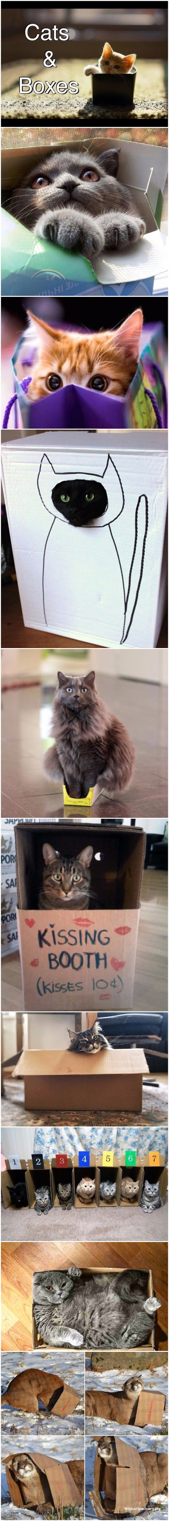 Funny cats in boxes picture collection