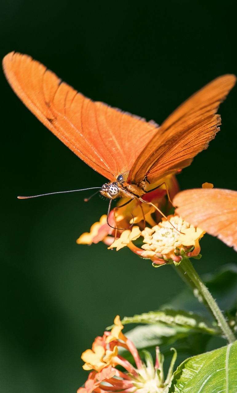 An orange butterfly on a flower.