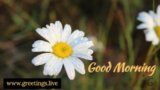 images is morning greetings with flowers in white  colour