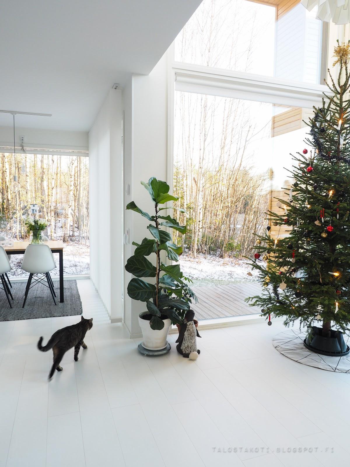kissa, olohuone, joulukuusi, keittiö, maisema
