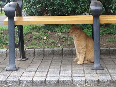ベンチ下で座って目を閉じている茶色い野良猫