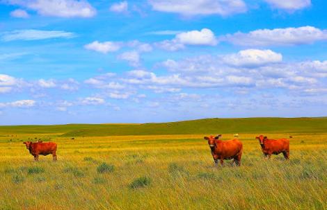 livros-pdf-zootecnia-veterinaria-bovinos