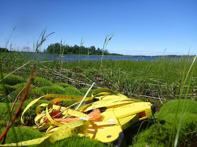 Mittanauhakela, jota ei saa kelattua takaisin kelalle, sammalikossa rannalla