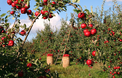Agricultura, recogida de fruta