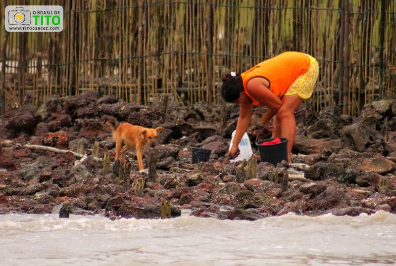 Marisqueira trabalhando em Marudá, no Pará