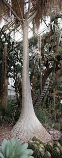 Baum im Botanischen Garten St. Gallen