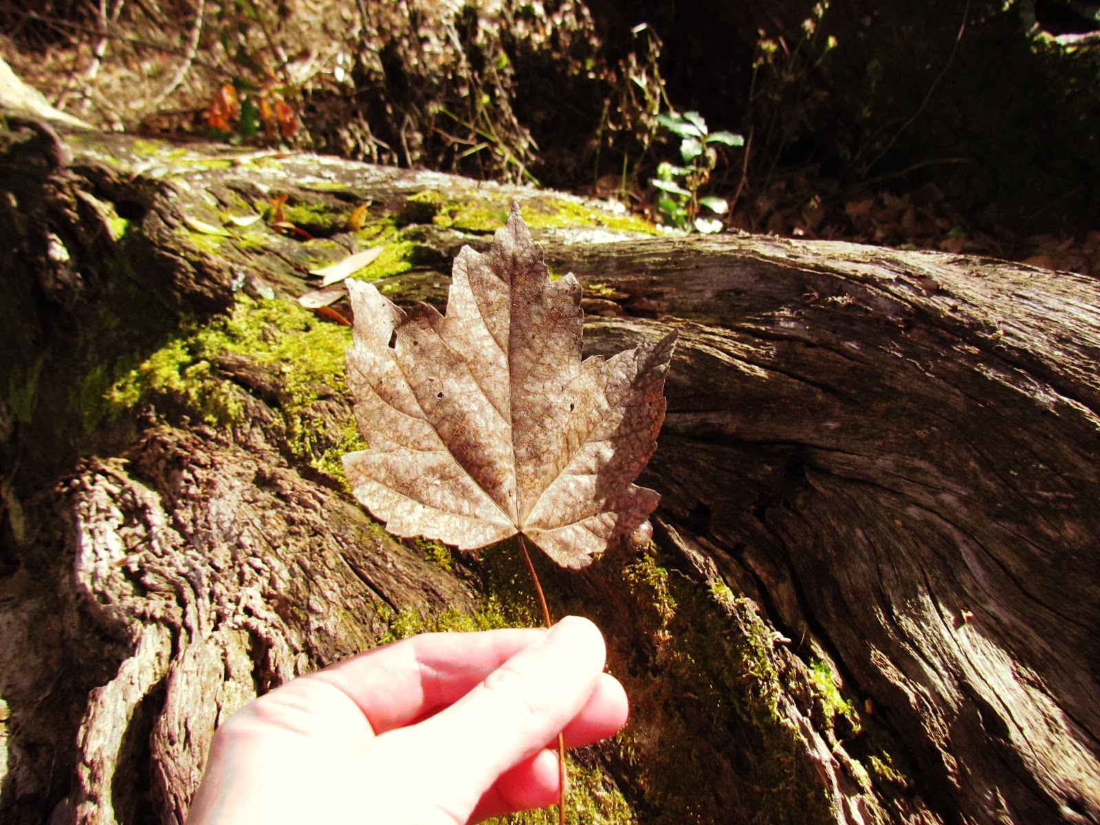 Trending Spots for Leafers to Find Golden Rustic Autumn Leaves