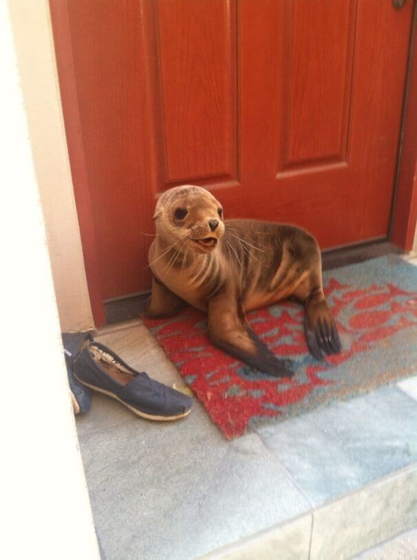 40 Heartwarming Pictures Of Animals - I Live By The Beach And This Little Guy Just Popped By For A Visit