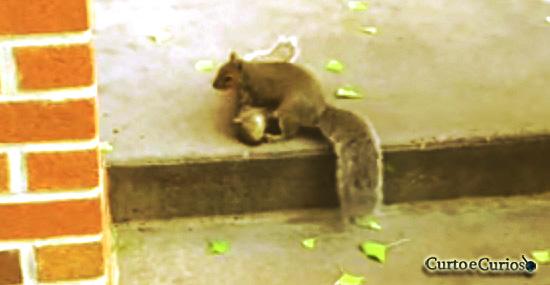 Emocionante: Esquilo tenta ajudar amigo morto e parece até pedir ajuda
