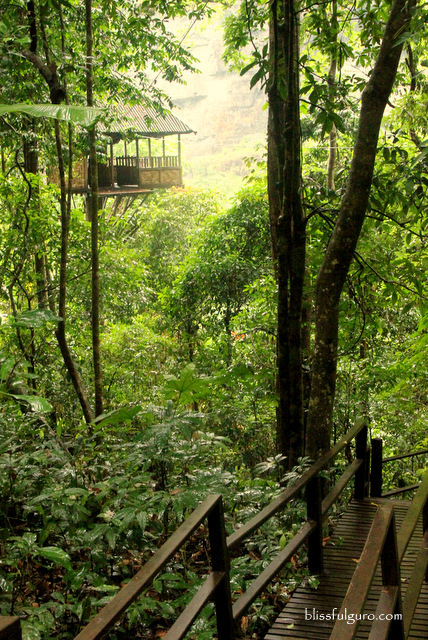 Treetop Explorer Jungle Hotel Pakse Laos Blog