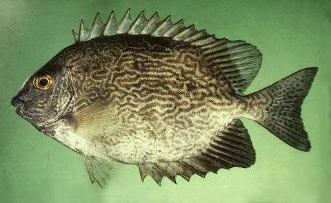 10 Ikan Laut Paling Berbahaya Bagi Manusia Rekan Bunda