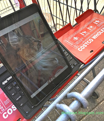 A photo of Lucy the cat on a tablet in Costco