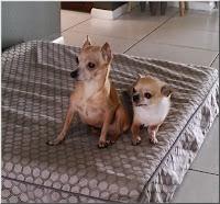 Cassie and Smidgen