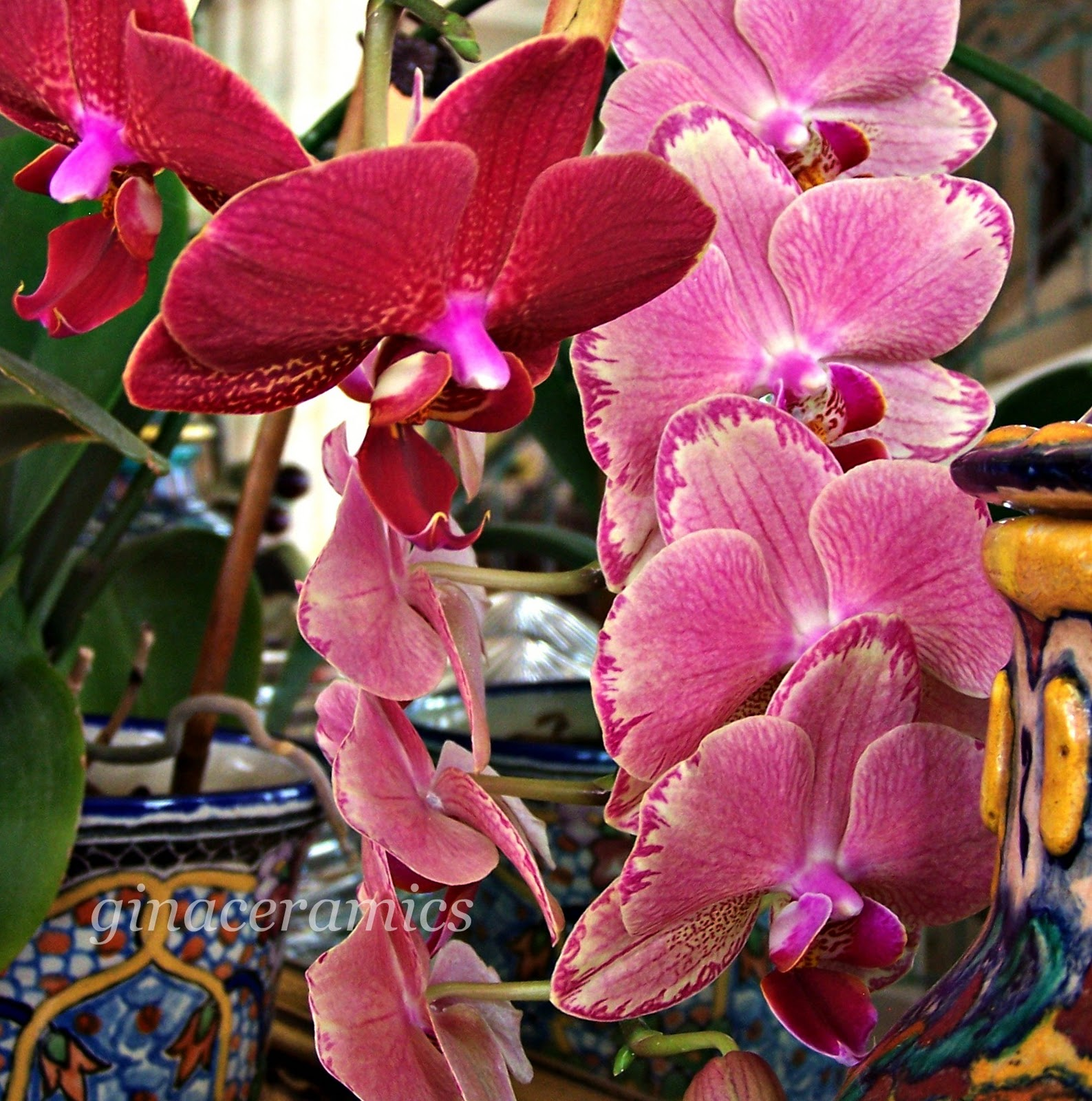 Art and Alfalfa: Why I love Orchids
