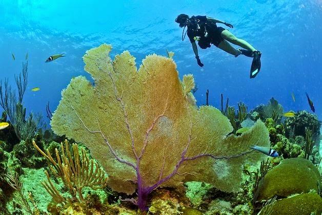 Korallenriff beim tauchen in Malaysia