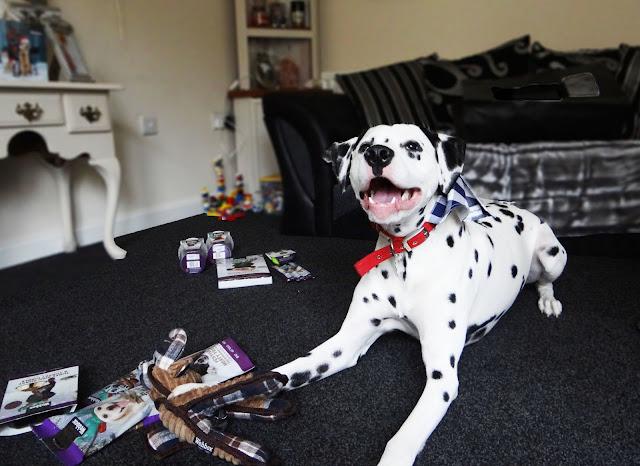 Webbox Dog Christmas Treats
