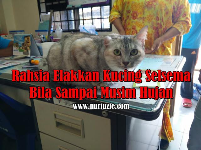 Rahsia Elakkan Kucing Selsema Bila Sampai Musim Hujan