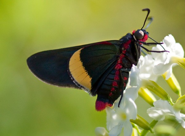Butterfly by Sharon_S