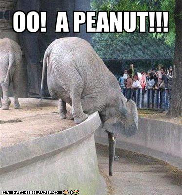 Elephant jokes - photo#31
