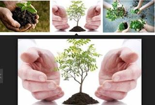 3 Usaha Efektif Untuk Menanggulangi Pemanasan Global (Global Warming)