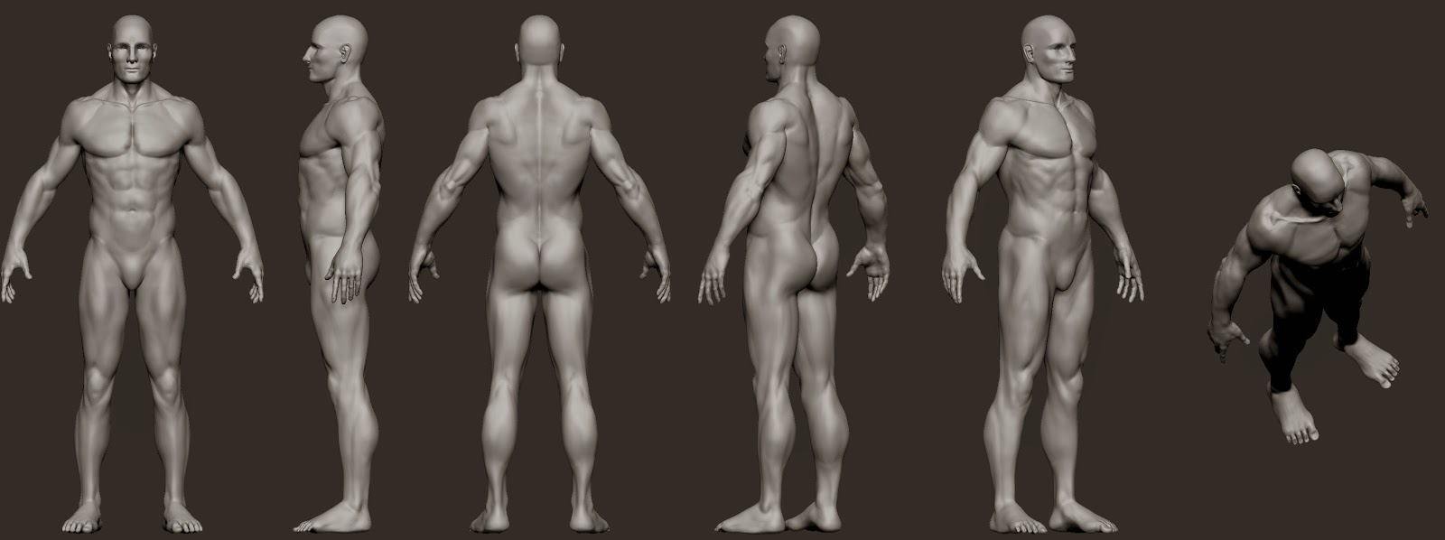 Good to be back! Male anatomy sculpt to warm up. - 3DTotal Forums