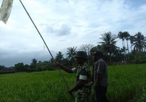 Tentara ini Halau Burung Bersama Petani di Kelurahan Sei Bilah