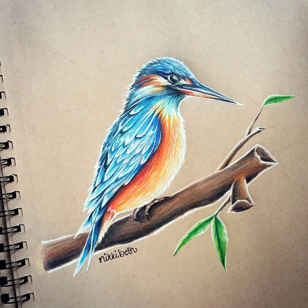 14-Kingfisher-Nikki-Beth-Animal-Portrait-Drawings-in-different-Styles-www-designstack-co