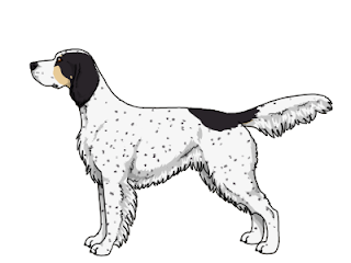 Furry-Paws Dog Breed Colors : English Setter Colors
