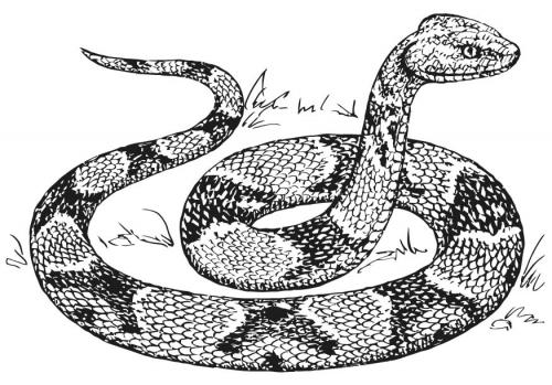 dessin de serpent a imprimer