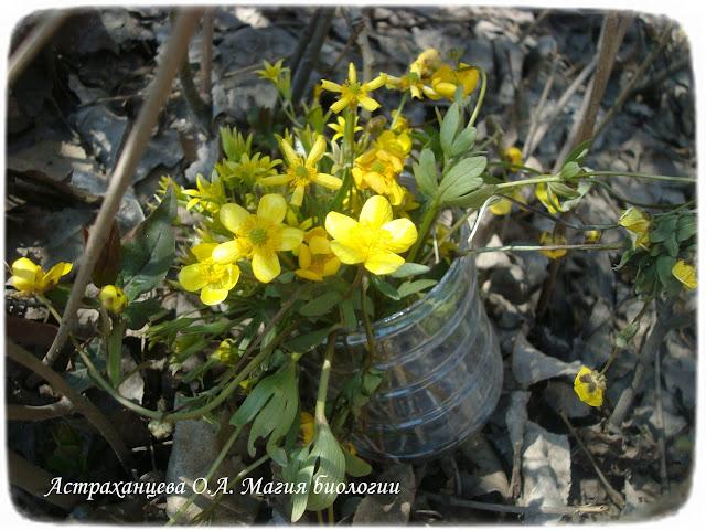 букет желтых цветов, гусиный лук, лютик, ваза