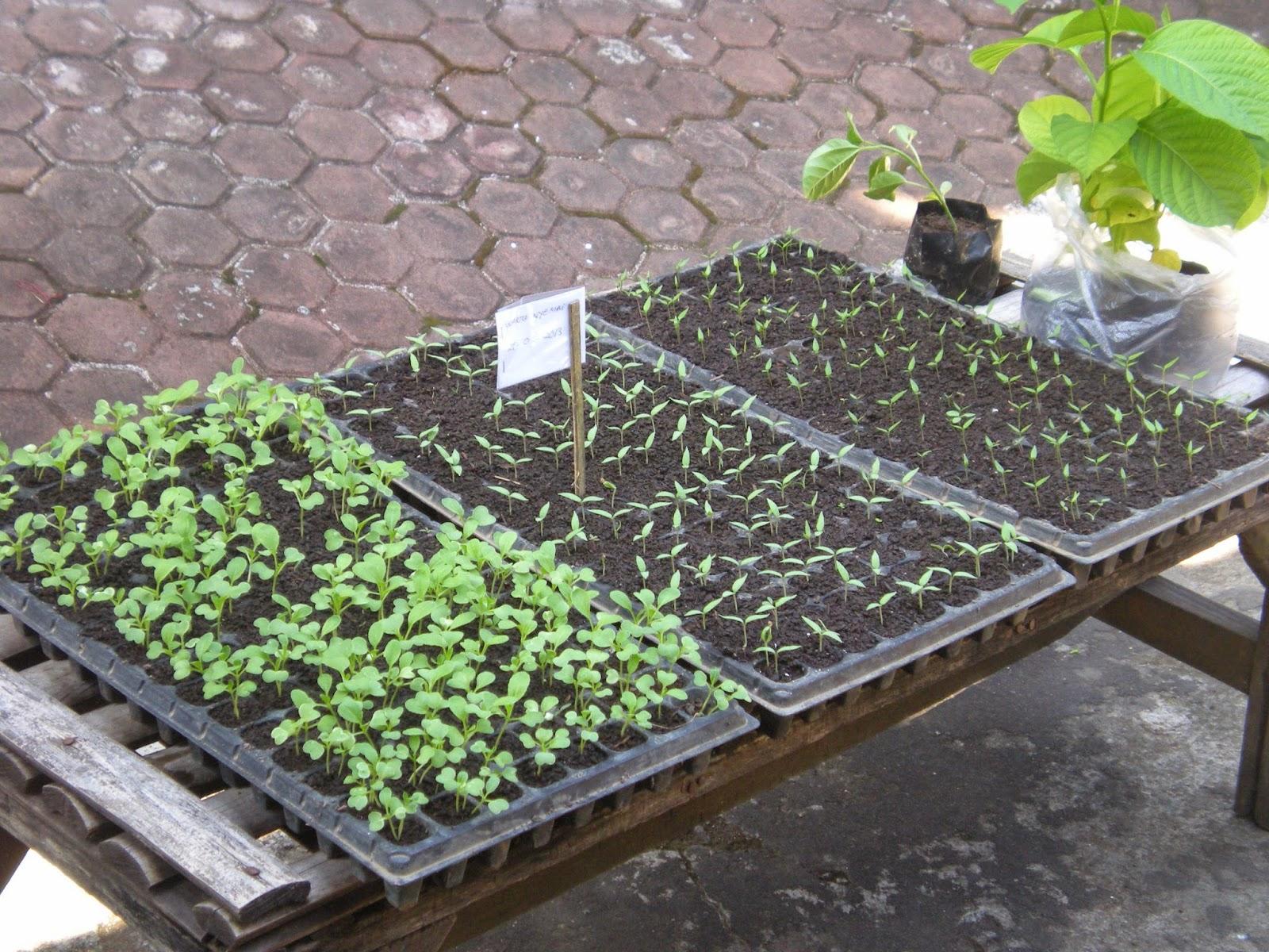 Benih Sayuran Murah Bibit Sayuran Unggulan Jual Benih