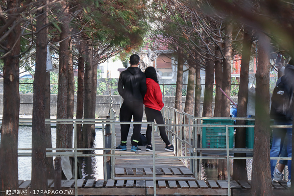 台中西屯|2019廣納幸福花海季1/20-2/20|中科落羽松|10公頃廣福花海拍到樂翻天