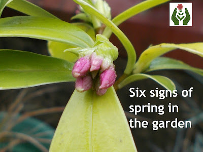 signs of spring Green Fingered Blog