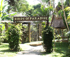 bali-bird-park-tempat-wisata-kebun-binatang-taman-burung-bali