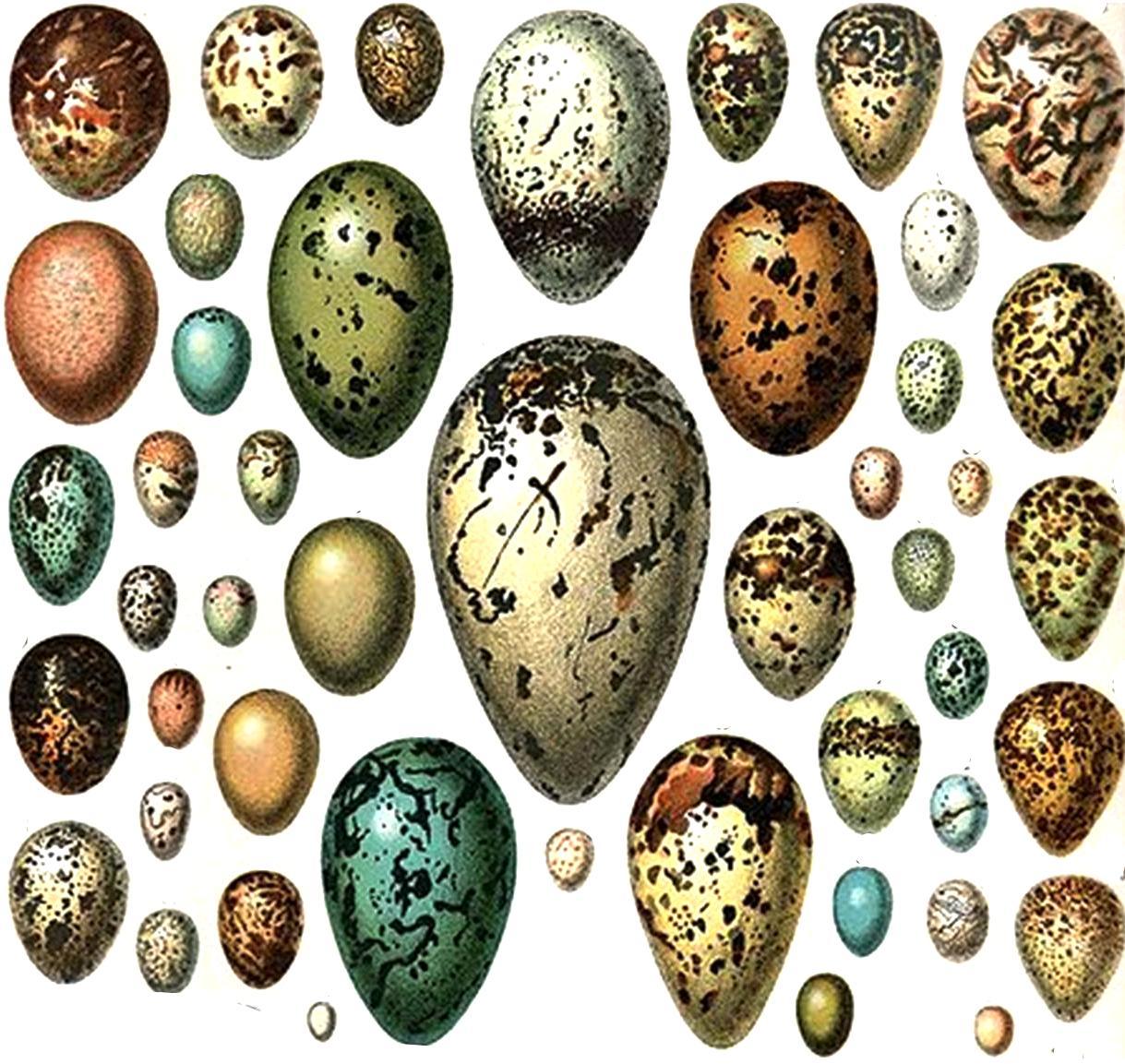 Wild Birds Unlimited How Birds Color Their Eggs