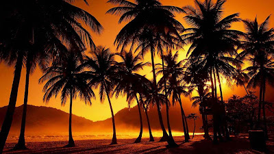 coconut-tree-night-natural-scene