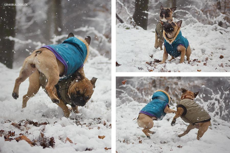 Hundeblog Französische Bulldogge im Schnee Mantel Schneeballschlacht