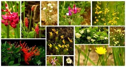 flora bariloche argentina