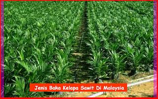 Jenis Baka Kelapa Sawit Di Malaysia